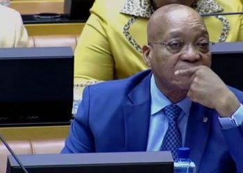 Best Zuma Moments