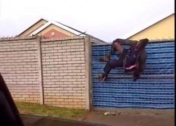 Home invader stuck on fence